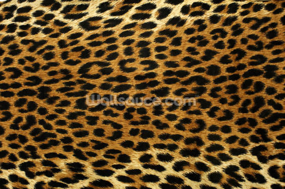 Leopard Print Wallpaper Wall Murals