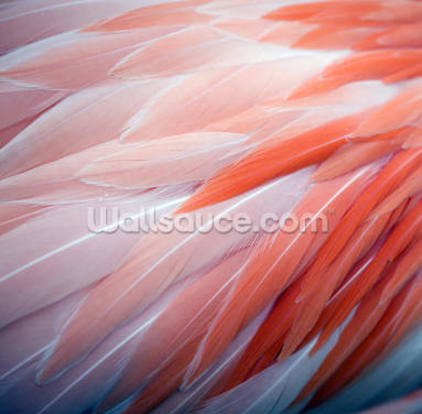 Fabulous Flamingo Feathers Wallpaper Wall Murals