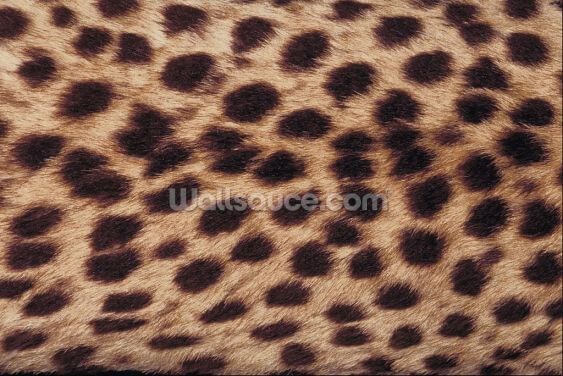 Cheetah Print Wallpaper Wall Murals