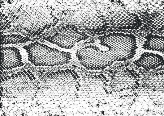 Black and White Snake Print Wallpaper Wall Murals