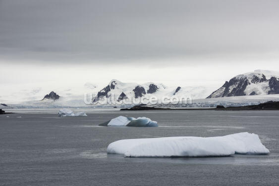 Blue Icebergs off Penguin Island Antarctica Wallpaper Wall Murals