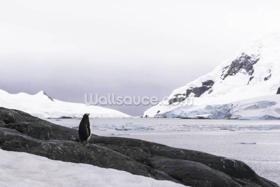 Checking the Weather Antarctica Wallpaper Wall Murals