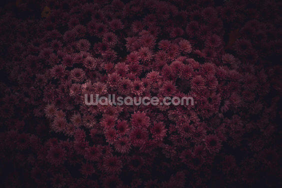 Dark Pink Flowers Wallpaper Wall Murals