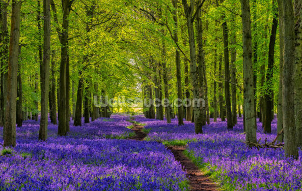 Path Through The Bluebells Wallpaper Wall Murals