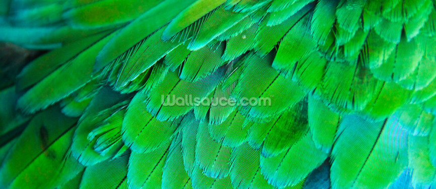 Neon Green Feather Print Wallpaper Wall Murals