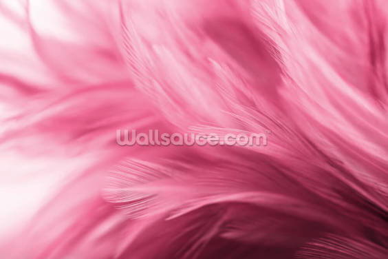 Wispy Pink Feather Print Wallpaper Wall Murals
