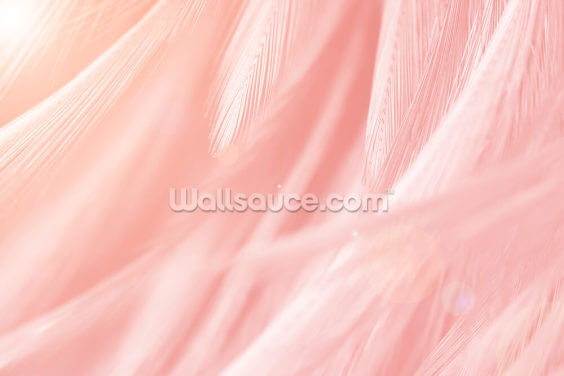 Pastel Pink Feather Print Wallpaper Wall Murals