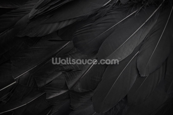 Feather Print Wallpaper Wall Murals