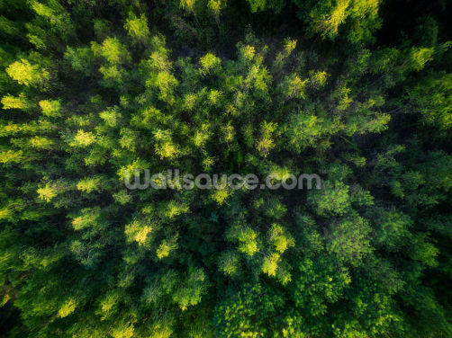 Forest Aerial View Wallpaper Wall Murals