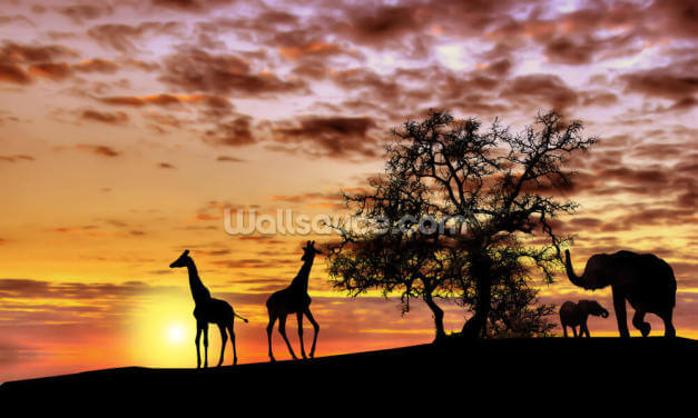 Safari Sunset Wallpaper Wall Murals