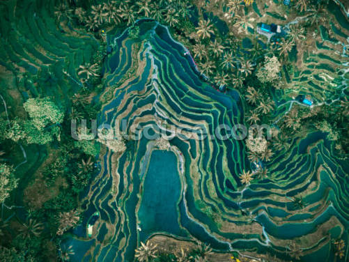 Rice Terraces Indonesia Wallpaper Wall Murals