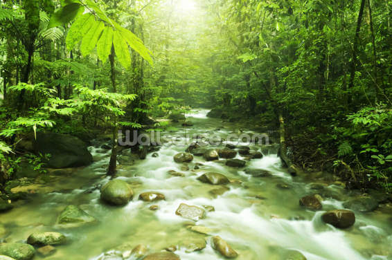 Forest River Wallpaper Wall Murals