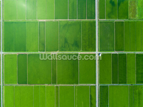 Rice Fields in a Vast Land Wallpaper Wall Murals
