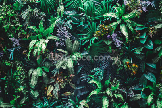 Leafy Jungle Wallpaper Wall Murals