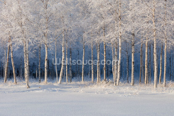 Frozen Trees Wallpaper Wall Murals