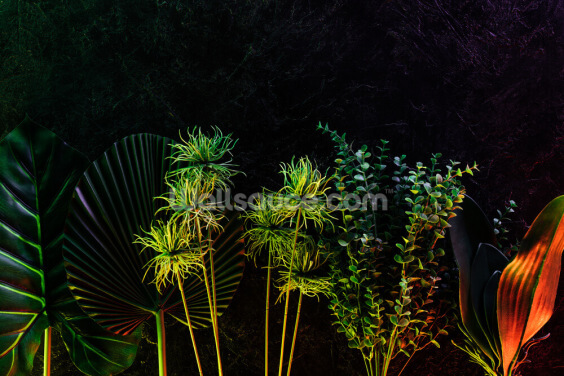 Moonlit Tropical Plants Wallpaper Wall Murals