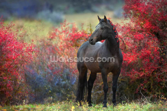 Black Berry Horse Wallpaper Wall Murals