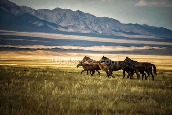 Herd of Wild Horses in Kazakhstan Wallpaper Wall Murals