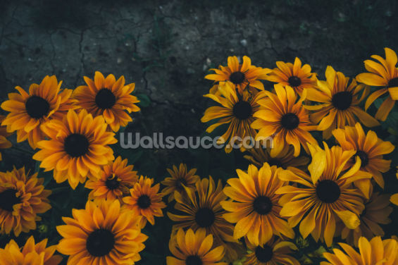 Yellow Flowers Blooming Wallpaper Wall Murals