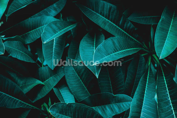 Green Jungle Leaves Wallpaper Wall Murals
