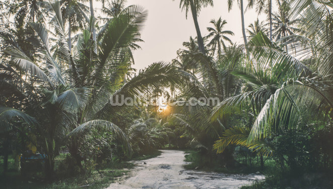 Sunset Jungle Wallpaper Wall Murals