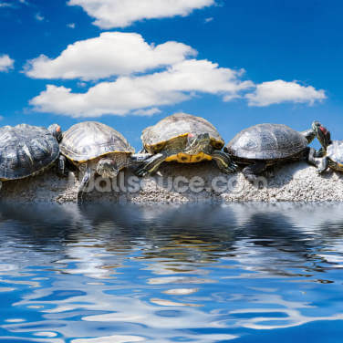 Turtle Meeting Wallpaper Wall Murals