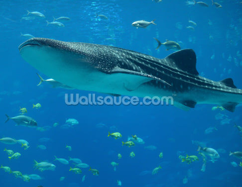 Whale Shark and Fish Wallpaper Wall Murals