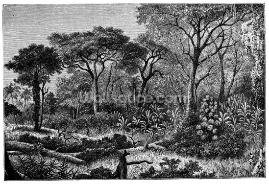 Antique Illustration of African Jungle Wallpaper Wall Murals