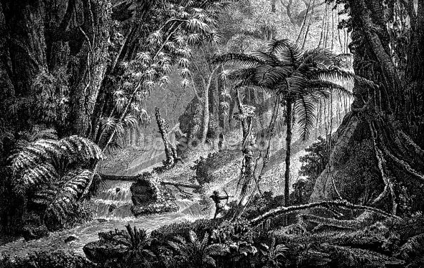 Antique Illustration of Brazil Jungle Wallpaper Wall Murals