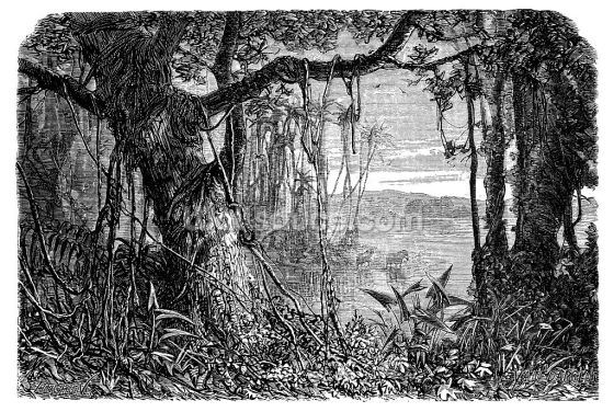Antique Illustration of Amazon Rainforest Wallpaper Wall Murals