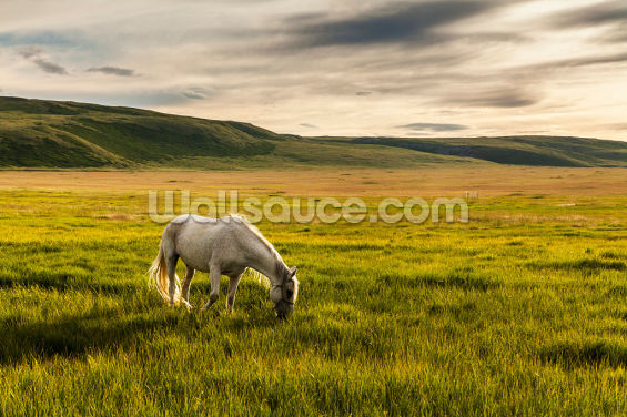 White Horse in the Mountains Wallpaper Wall Murals
