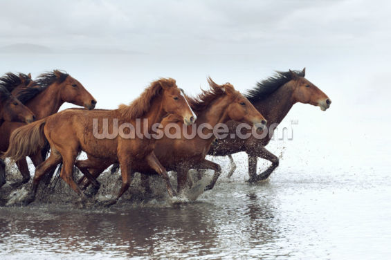 Herd of Wild Horses Running in Water Wallpaper Wall Murals