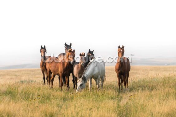 Wild Horse Family Wallpaper Wall Murals