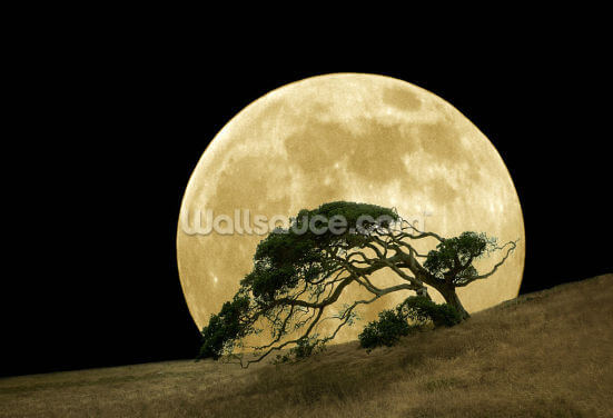 Rising Moon Wallpaper Wall Murals