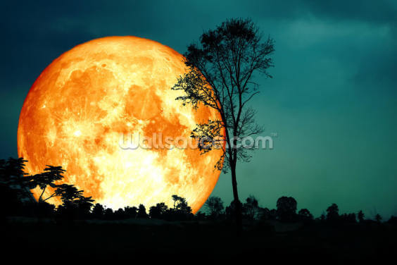Orange Moon and Teal Skies Wallpaper Wall Murals