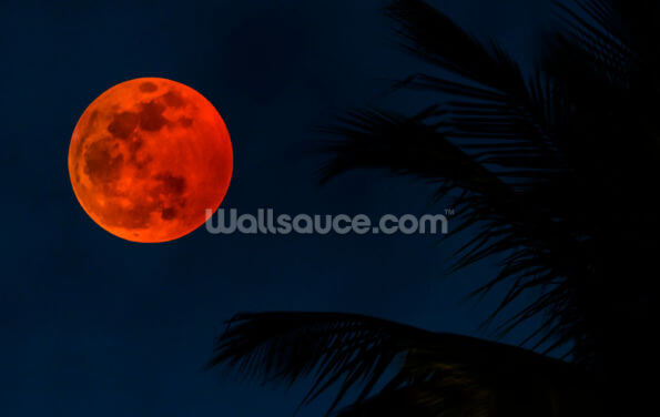 Dark Blue Skies and Orange Moon Wallpaper Wall Murals