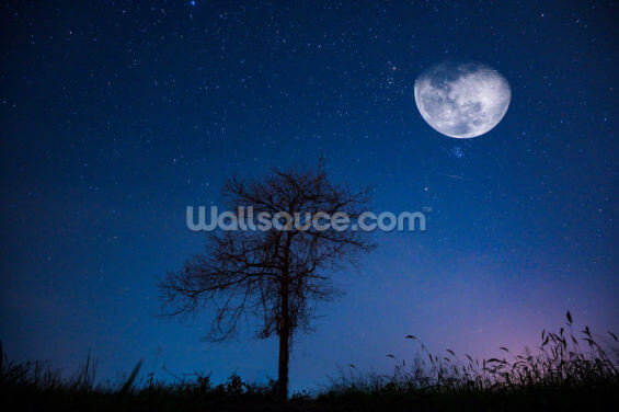 Dipping Moon Wallpaper Wall Murals