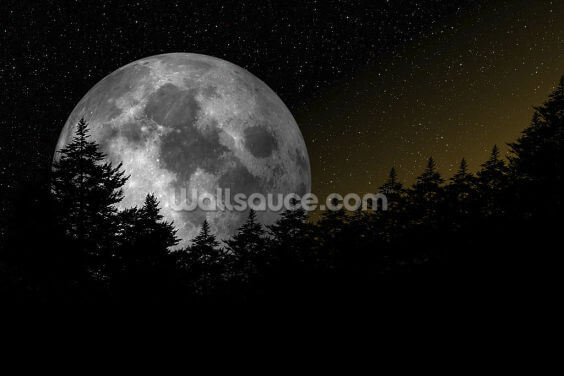 Moonrise Behind Trees Wallpaper Wall Murals
