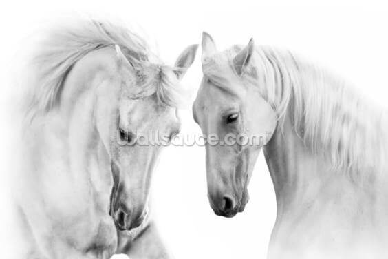 Dream Horses Wallpaper Wall Murals
