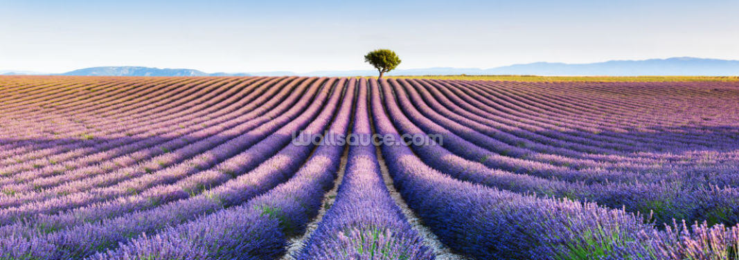 Lavender Fields in Provence Wallpaper Wall Murals