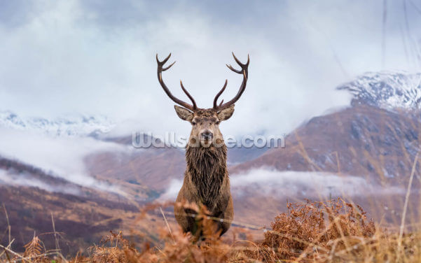 The Deer King Wallpaper Wall Murals