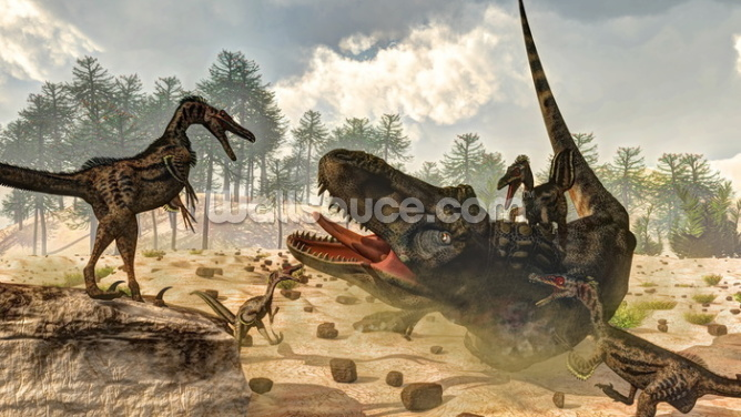 Tarbosaurus Attacked by Velociraptor Dinosaurs Wallpaper Wall Murals