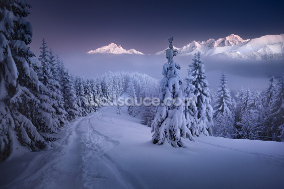 In the Winter Wallpaper Wall Murals