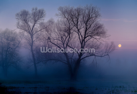 Another New Day Wallpaper Wall Murals