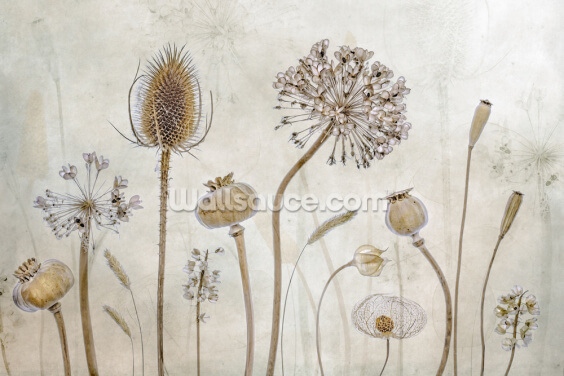 Aged with Beauty Wallpaper Wall Murals