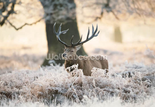 Frosty Stag Wallpaper Wall Murals