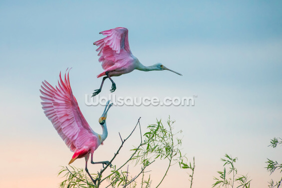 Rosy Spoonbills Wallpaper Wall Murals