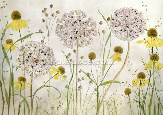 Alliums and Heleniums Wallpaper Wall Murals