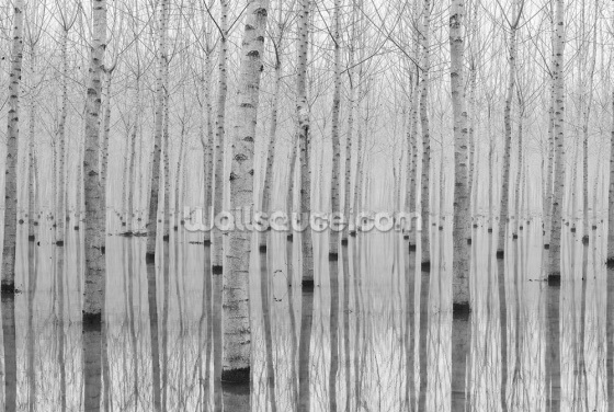 Birch Lake Wallpaper Wall Murals