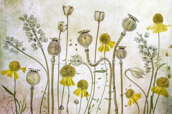 Poppies and Helenium Wallpaper Wall Murals